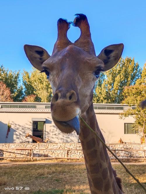 带着 vivo S7 逛野生动物园,随手一拍就是超清大片 - 热点资讯 家电百科 第6张